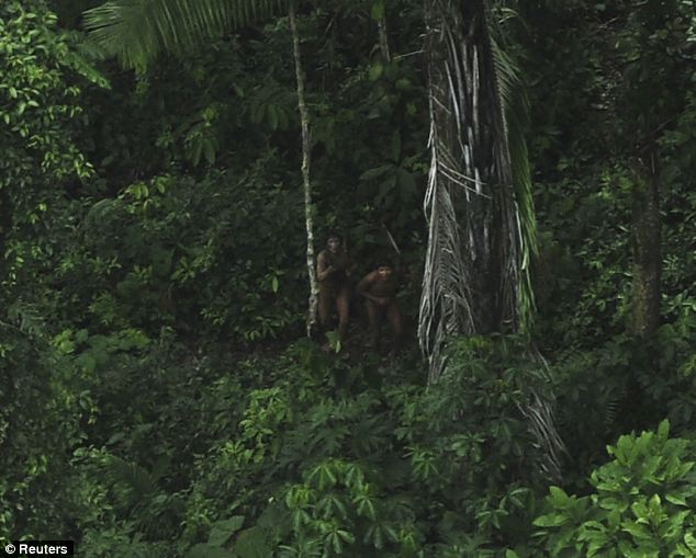 Threatened: The elusive tribe's dwellings are at risk from cattle ranching and logging, among other things, though, and its land is monitored by officials to prevent encroachment