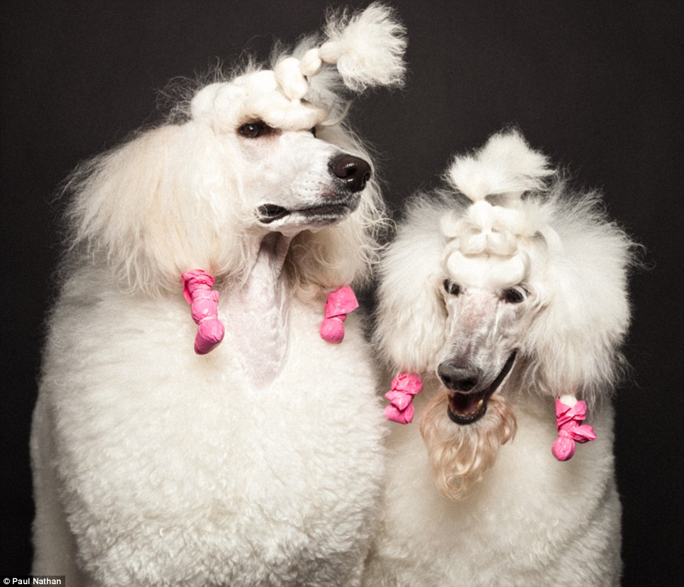 Photographer Paul Nathans New Book Groomed Captures
