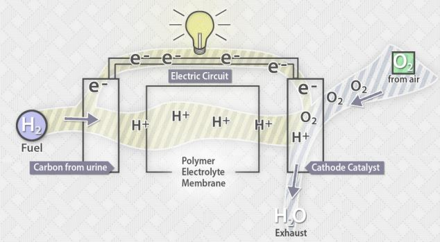At the anode, a catalyst - usually platinum - knocks the hydrogen atoms' electrons off, leaving positively charged hydrogen ions and free electrons. A membrane placed between the anode and cathode only allows the ions to pass through. This means electrons have to travel along a circuit generating an electric current