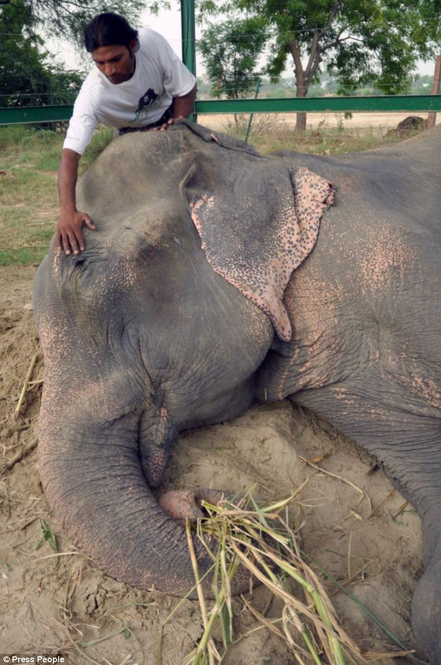 Over the weekend, Raju received emergency medical attention to his wounds as well as a bath and food