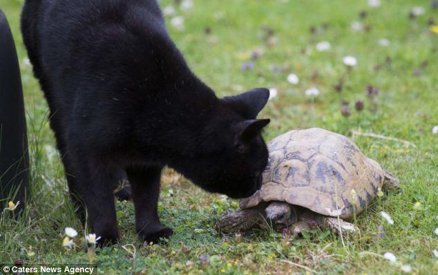 Melhores amigos: Jet gato de estimação da família Floris (foto) também tem formado um improvável vínculo com o réptil envelhecimento