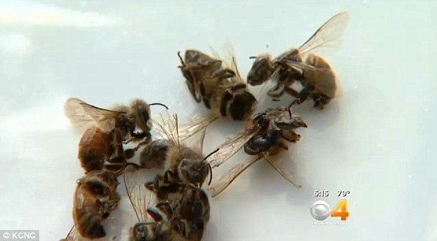 Honeybees Are Dropping Out Of The Sky In Colorado And Pesticides Are Likely To Blame Daily
