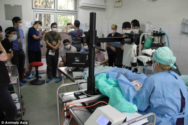 Passing on skills: Students look on as Claudia Hartley performs surgery on a bear. She said she would not complain if she was needed in China again, but said her time there was emotionally challenging