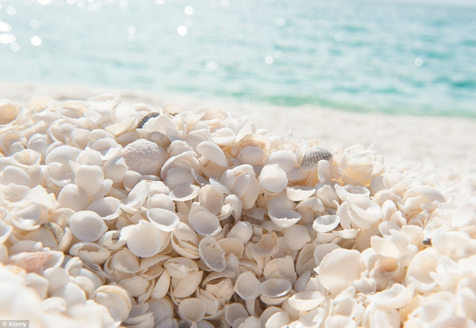 Shell of a time: Australia's Shell Beach, in the Shark Bay World Heritage Area, is made of trillions of tiny Hamelin cockle shells and is one of only two in the world