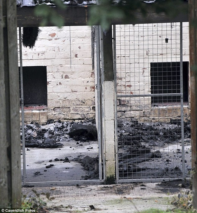 Harrowing: Empty kennels at the Manchester Dogs' Home - ozara gossip