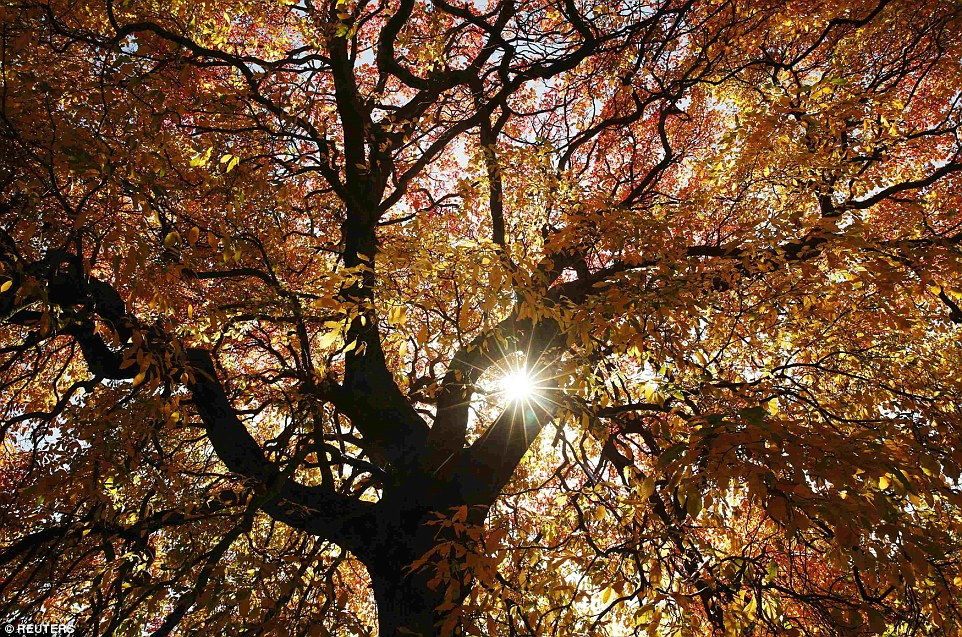 Image result for light coming through trees