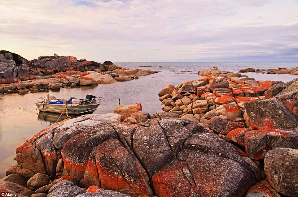 The Bay of Fires, in the Bay of Fires Conservation Area on the northeastern coast of Tasmania, is a beauitful region of white beaches, blue water and orange-hued granite
