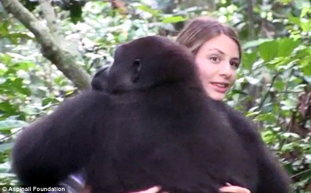 Reunited: After ten years apart, Tansy and Djala make friends again in the Gabon rainforest