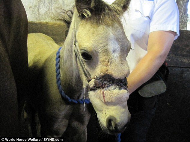 Star The Foal Left With Horrific Wounds After Owner Left