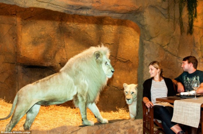 Jamala Wildlife Lodge. Вкус Африки в центре Австралии