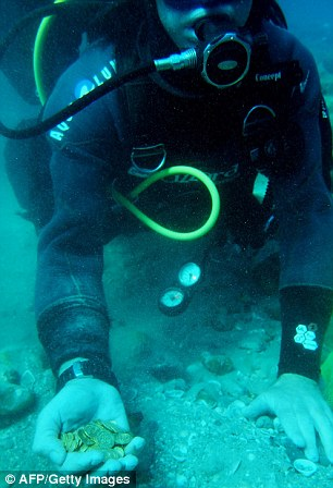 Pure chance: Scuba divers (left) thought they were 'toy coins' initially before experts confirmed it was gold. The 2,000 pieces are now property of the state with no finder's fee