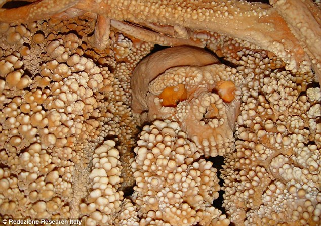 Genetic analysis of the bones (above) of 'Altamura Man', found entombed in limestone in a cave in Altamura, Italy, has revealed that they belong to a Neanderthal who fell into the cave 128,000 to 187,000 years ago