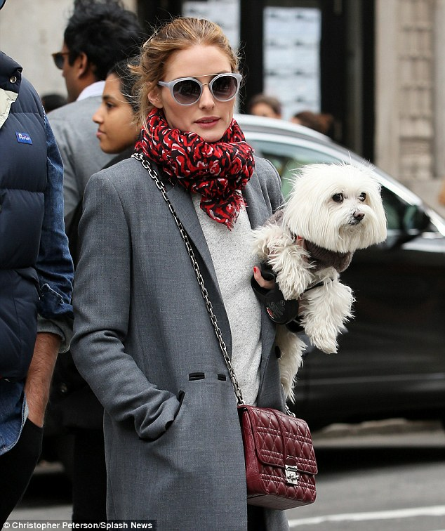 Unimpressed: The cute Maltese Terrier didn't look too happy about being picked up to cross the road