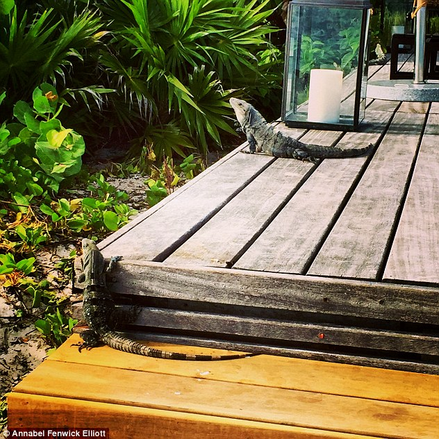 Initially mistaken for sculptures, these are indeed real iguanas sunbathing on one of Nizuc's decks