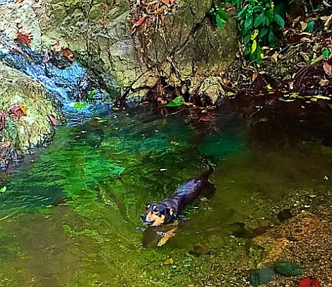 I had a companion to take me on waterfall hikes around the property in the form of Lana's beloved rescue dog, Osa
