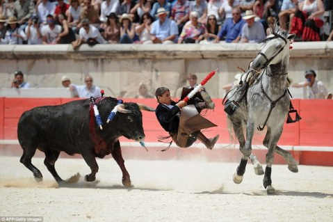 The bull picks its moment to charge as Ms Vicens falls to ground, with women gasping in the crowd behind her