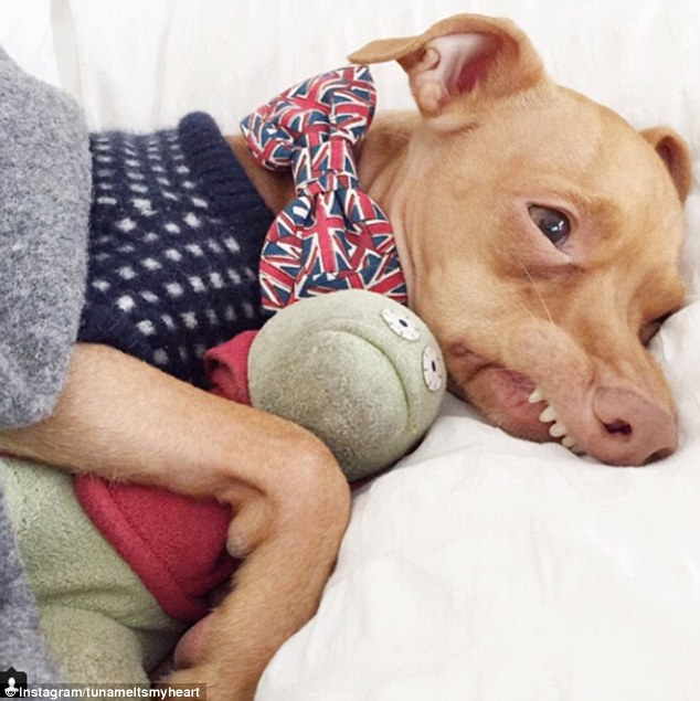Meet Tuna the dog with 1.3million Instagram followers ...