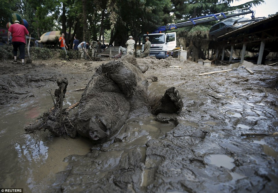 The mangled body of a bear lies on the sludge in Tbilisi as workers in the background prepare burials for the dead animals