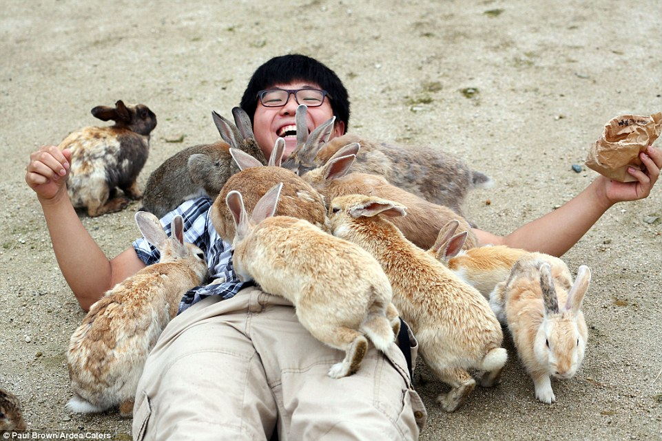 Top 10 Strangest Things in the World: Ōkunoshima, the Rabbit Island