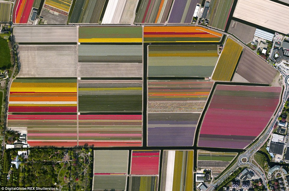The blooming tulip fields in Lisse, Netherlands, offer a stunning sky-high shot - in particular, during the peak bloom season in April