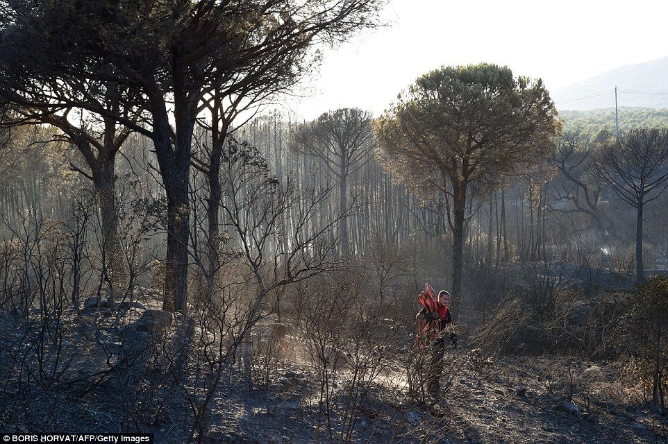 Charred: Around 400 firefighters contained  the wildfires in the Var department of southern France last night