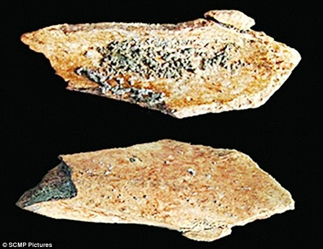 These two thigh bones, thought to belong to an early human species that lived 100,000 years ago, discovered close to Xuchang city in China's Henan province show signs of having been gnawed. Archaeologists leading the excavation believe the bite marks may have been made by other early humans in an act of cannabilism