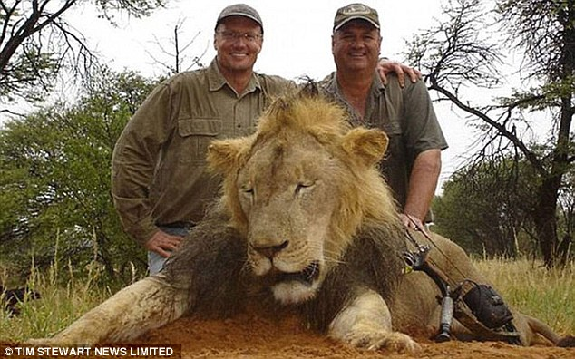 What a paradox that a creature so fantastically fanged as Cecil the lion (not pictured) should have been slaughtered by Walter Palmer (left), a middle-aged, balding, Midwestern American who applies his working hours to the preservation of teeth.