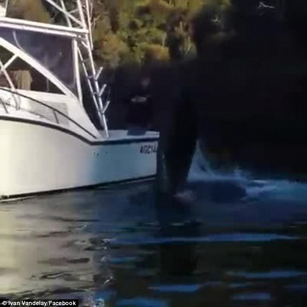 The whale appeared to flap its fin in appreciation after the fishermen successfully managed to help it