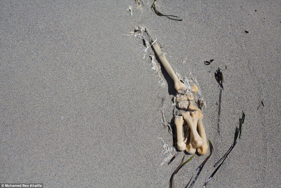 Buried: The migrants' bones poke out from under the sand after they drowned while desperately trying to flee their war-torn homelands