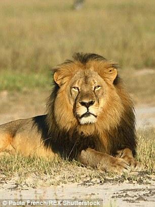 Image result for predatory animals