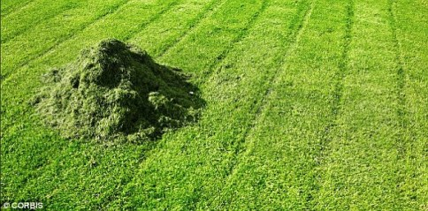 Image result for freshly cut grass