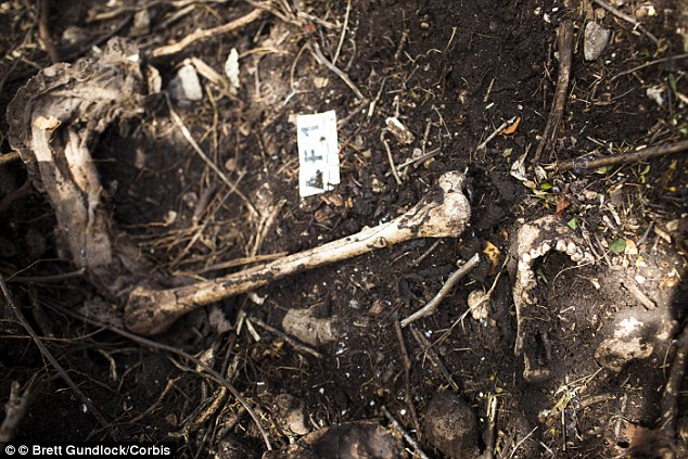 Horrifying: A skull, bones and a girl's dress (pictured in November 2014) were found in a clandestine grave, near the city of Iguala, where 43 students were kidnapped