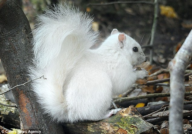 White Squirrel Thought To Be One Of Just Four In The UK