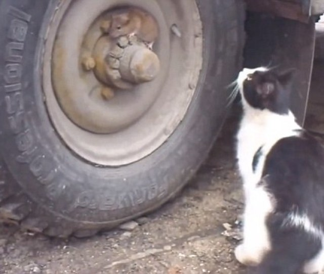 Eventually The Cat Started Investigating The Wheel Despite Having Looked At It And Not Seen