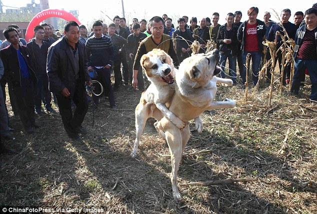 Image result for dog killed in dogfight