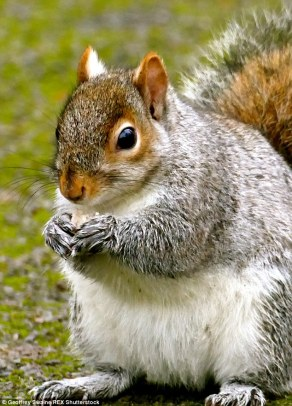 Image result for squirrels stake nuts in car