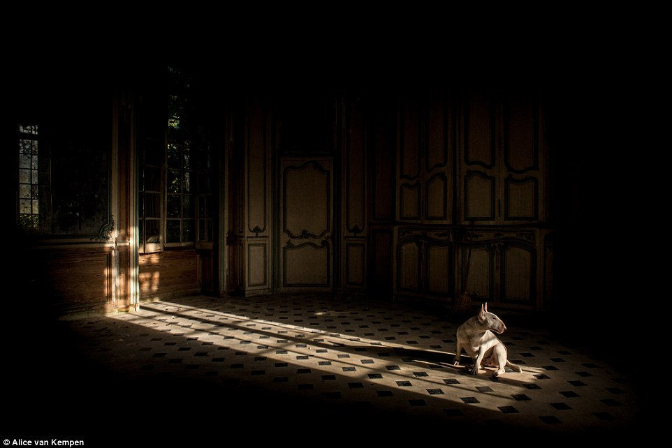 In an abandoned castle in France the pup sits in shards of light splayed across the darkened room