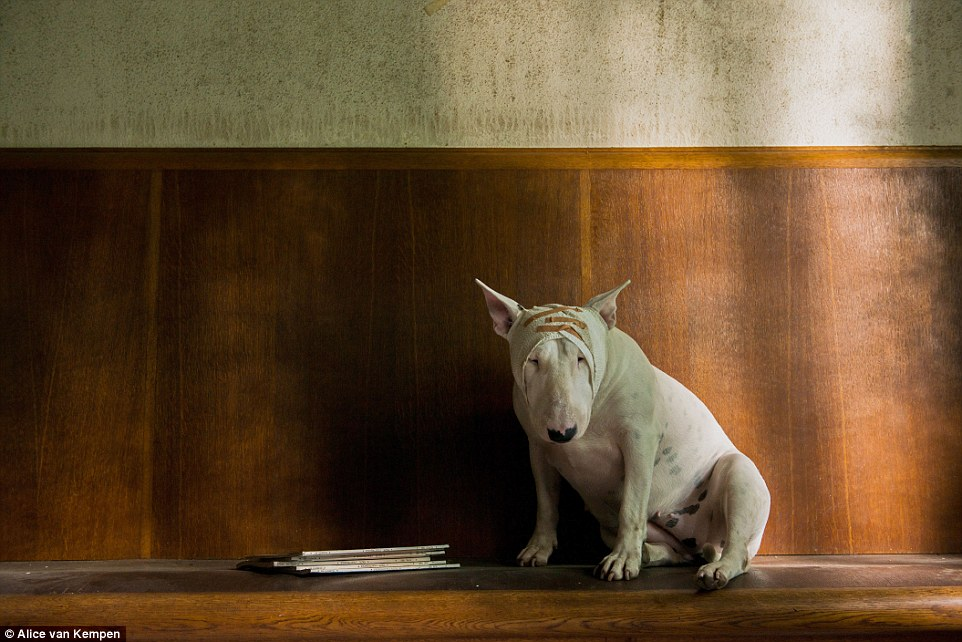 Looking a little stressed, the young pooch perches on a pew as she waits for the doctor in this former surgery in Belgium