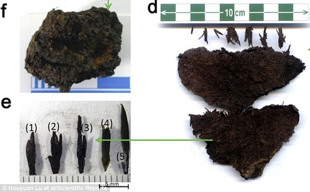 Archaeologists have discovered a huge stash of the oldest tea in the world buried in the tomb of an ancient Chinese emperor. The tea (pictured right) was badly decomposed, but analysis showed only the finest tips (bottom left) had been picked and buried with the emperor. Similar tea was found in a tomb in Tibet (top left)