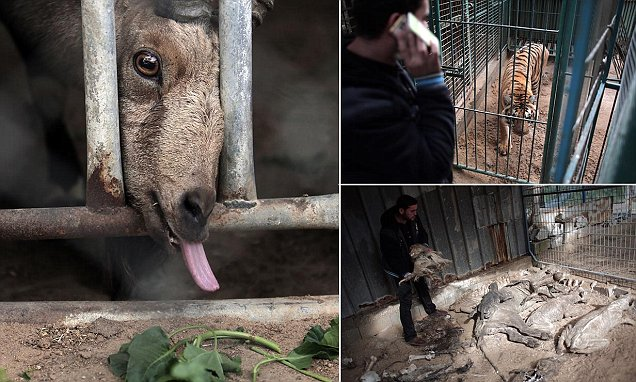 Animals At Gaza S Zoos Die Of Hunger Diseases Daily