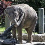 Asian elephant found dead at Oklahoma zoo; second to die in months