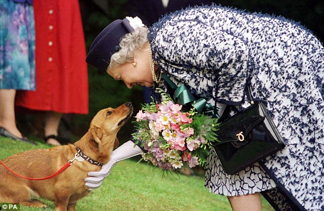 Affection: HM with a pet dorgi in 1998. Numerous dogs were bred from the Queen's first corgi, Susan, and some were mated with dachshunds to create dorgis