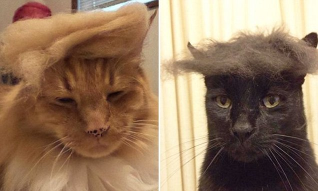 Trumpyourcat Internet Pranksters Make Their Cats Look Like Donald Trump Daily Mail Online