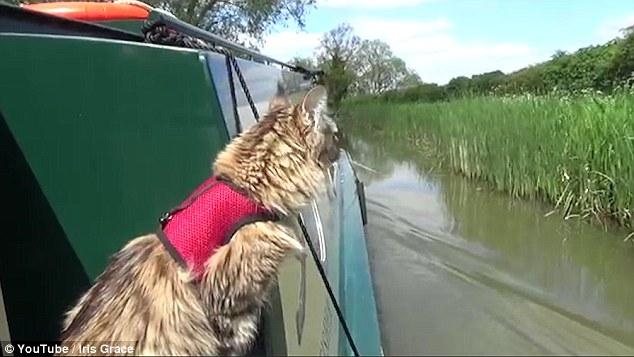 El gato se une a Iris en una variedad de actividades, desde montar en bicicleta y camina a días pasados en una gabarra