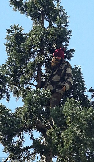 A man is causing a stir in Seattle after climbing an 80ft tree and refusing to come down