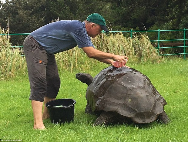The world's oldest living animal is starting over with a clean sheet at 184 years old - after a vet gave him his first ever bath