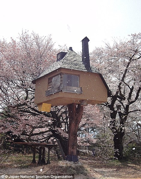 Fairytale: The tea house treehouse is set in a grove of pink petaled cherry trees and looks as if it sprang from the imagination of Hans Christian Andersen