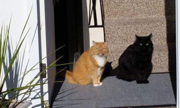 optical illusions find cat # 63