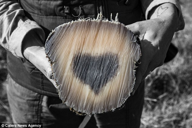 Conservationists Discovers Heart Symbol Running Through