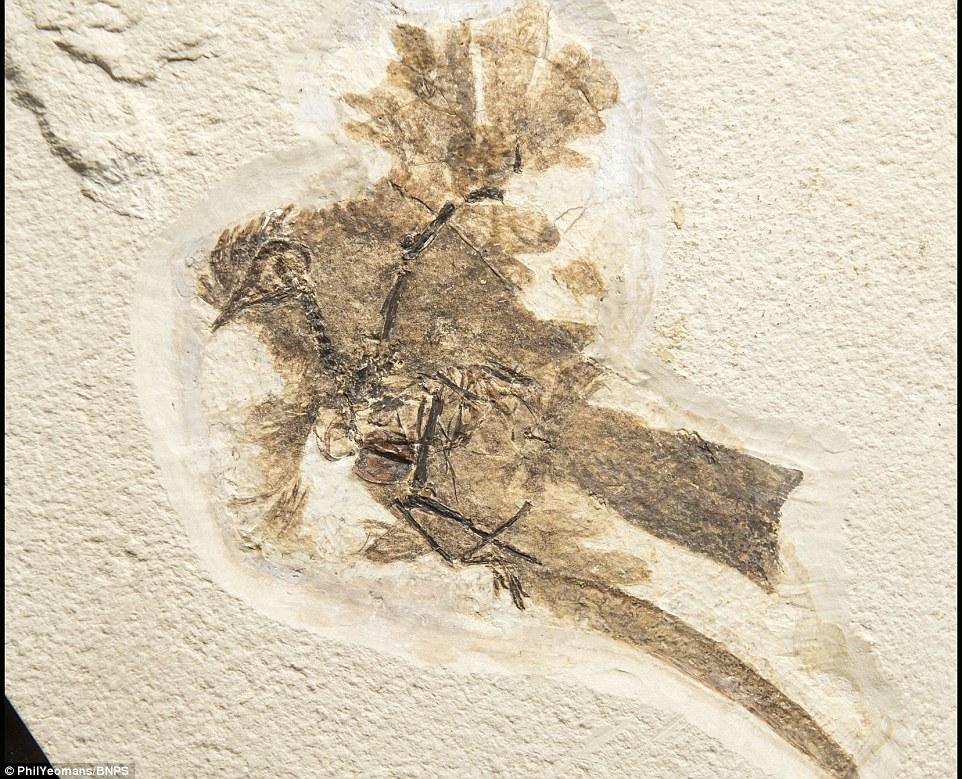 Billed Duck Petrified Dinosaur